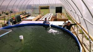 5-Microfarm-pool-300x169